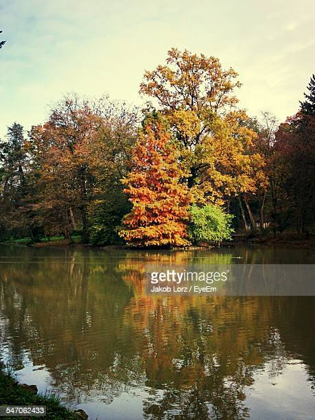 Lake And Trees In Forest Against Sky