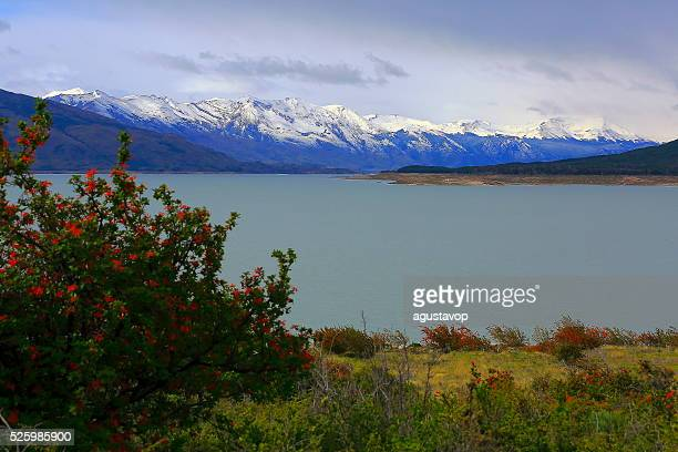 Lake Argentina, Snowcapped mountains, red flowers, Patagonia, Calafate