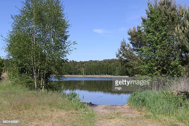 Lake at Spreewald
