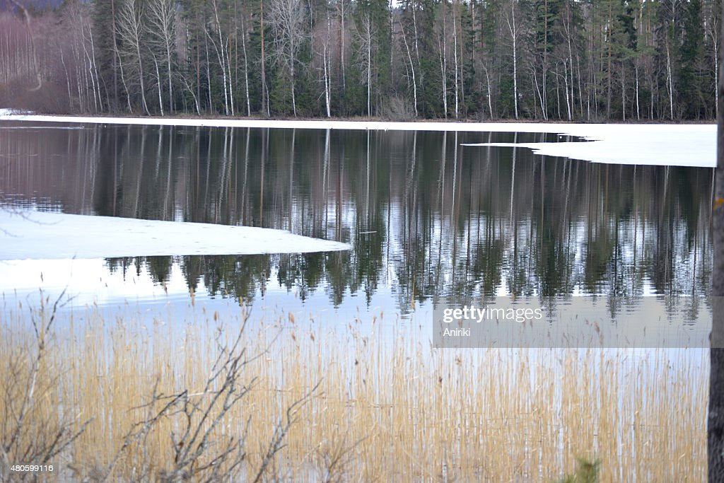 Lake at spring : Stock Photo
