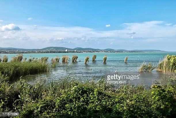 lake balaton - fstoplight stock photos and pictures