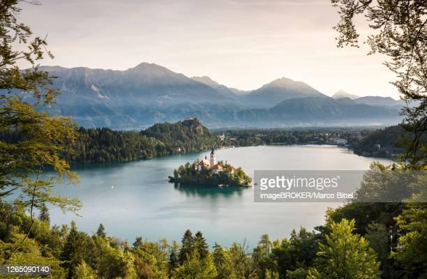 lake bled with the island blejski otok with st. mary's church, behind it karawanken, bled, slovenia - bledsjön bildbanksfoton och bilder
