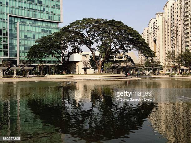 Lake By Tree Amidst Buildings In City Against Clear Sky