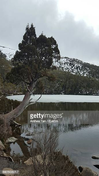 Lake By Trees Against Sky During Winter