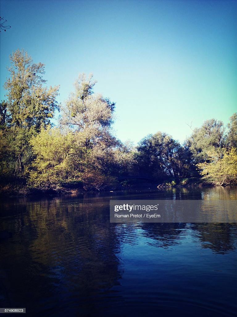 Lake By Trees In Forest Against Clear Blue Sky : ストックフォト