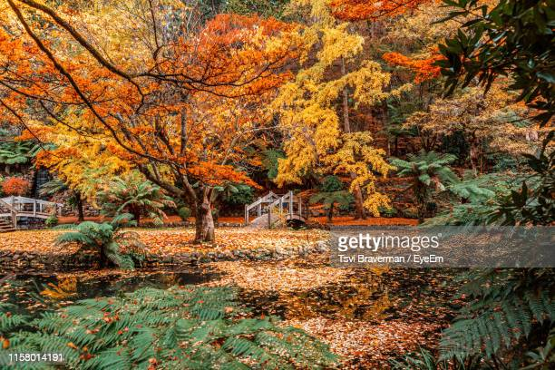 lake by trees in forest during autumn - dandenong stock photos and pictures