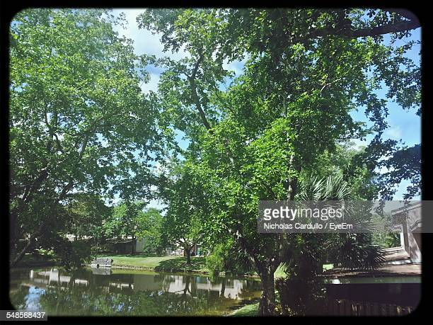 lake by trees in park - transferbild stock-fotos und bilder