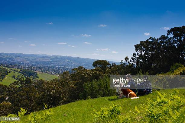 lake chabot overlook - castro district stock pictures, royalty-free photos & images