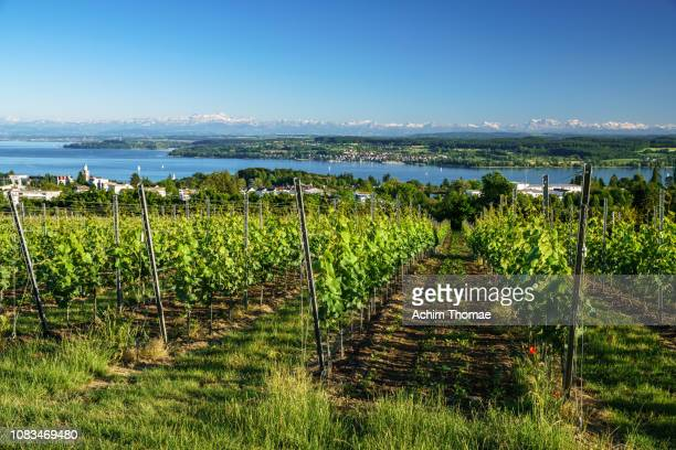 lake constance, germany, europe - bodensee stock-fotos und bilder