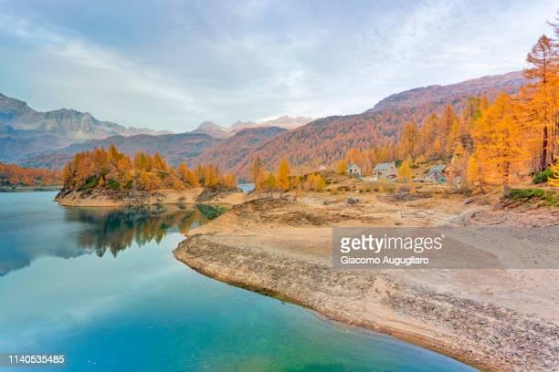 Lake Devero and yellow larches on the lakefront, Alpe Veglia and Alpe Devero Natural Park, Baceno, Verbano Cusio Ossola province, Piedmont, Italy