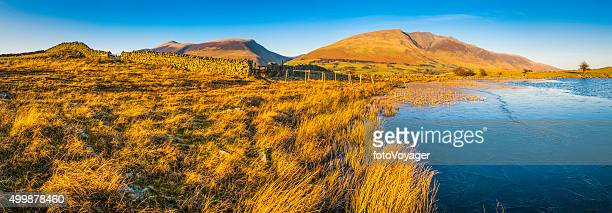 lake district golden light on blencathra dry stone wall cumbria - blencathra stock photos and pictures