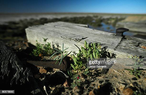 An old discarded Railway sleeper and nail lying forlone in the desert.