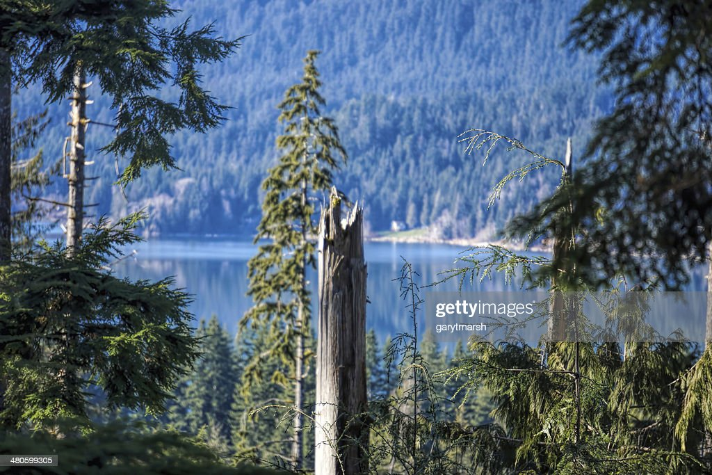 lake from above : Stock Photo
