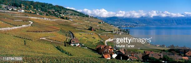 lake geneva and vineyards in autumn - vaud canton stock pictures, royalty-free photos & images