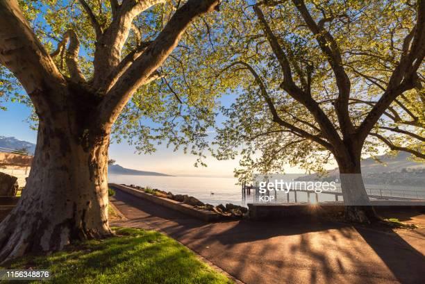 lake geneva at vevey public park, switzerland - geneva switzerland stock pictures, royalty-free photos & images