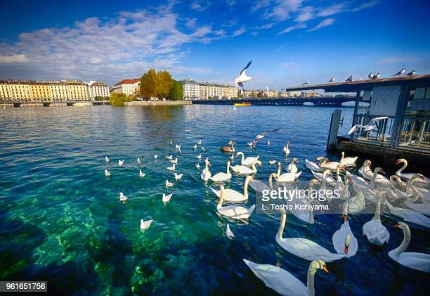 Lake Geneva in Geneva, Switzerland