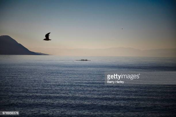 lake geneva - harley bird stock pictures, royalty-free photos & images