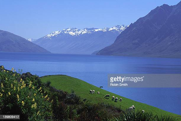 lake harwea, south island, new zealand - south island new zealand stock pictures, royalty-free photos & images