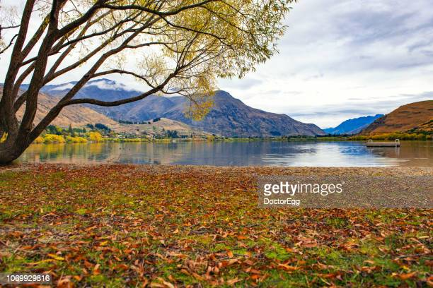 lake hayes in autumn, new zealand - arrowtown stock pictures, royalty-free photos & images