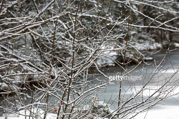 lake hintersee in winter (berchtesgadener land, bavaria/ germany) - berchtesgadener land stock photos and pictures