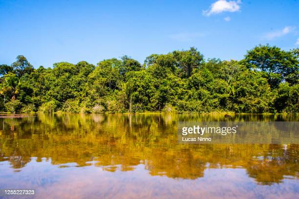 lake in a nature reserve area in mato grosso, brazil. - cerrado stock pictures, royalty-free photos & images