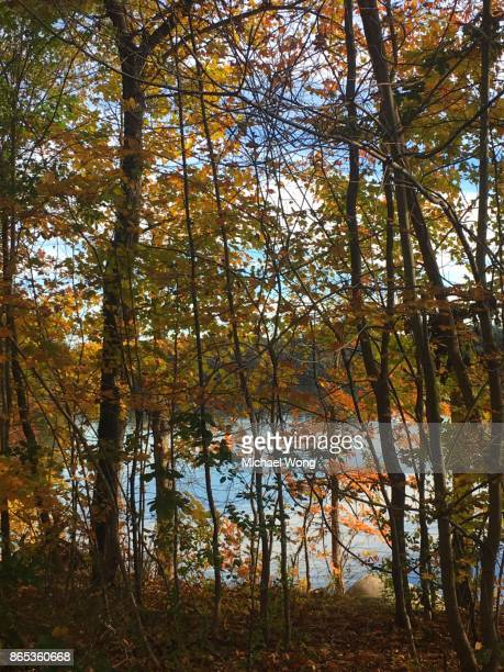 Lake in Autumn with Fall foliage
