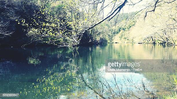 Lake In Forest On Sunny Day