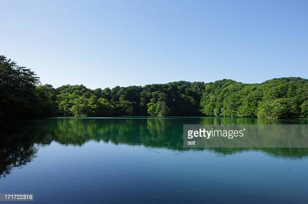 lake in forest,reflection of trees in water - 自然現象 ストックフォトと画像