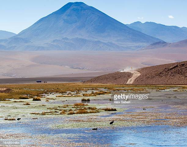 a lake in front of a volcano in the atacama desert, chile. - alex saberi stock pictures, royalty-free photos & images