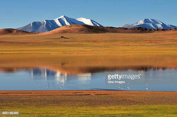 lake in ngari prefecture with snow mountain in background - mt kailash stock pictures, royalty-free photos & images