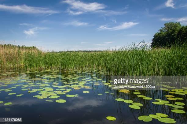 lake in podlasie - maslowski stock-fotos und bilder