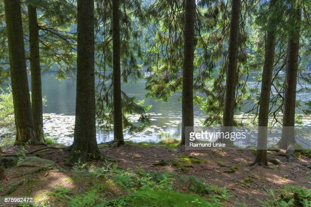 Lake in summer, Lake Großer Arbersee, Bayerisch Eisenstein, Bavarian forest, Bavaria, Germany