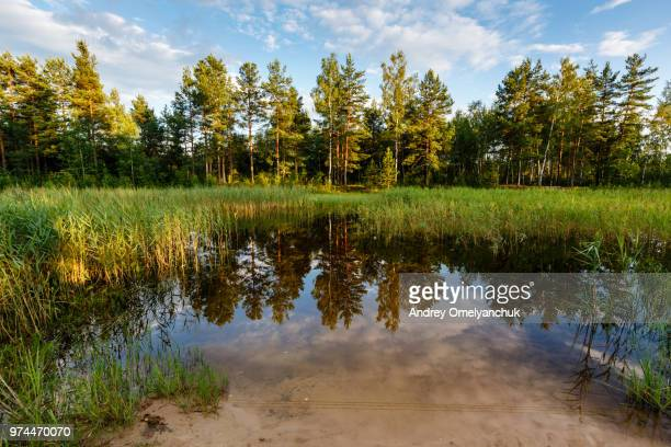 lake in the fores - forens stock pictures, royalty-free photos & images