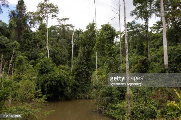 lake in the forest, borneo, malaysia - argenberg stock pictures, royalty-free photos & images