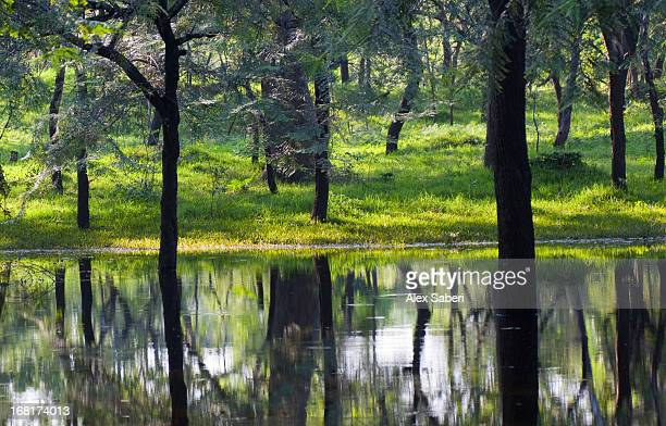 a lake in the green forest in polonnaruwa temple area - alex saberi stock pictures, royalty-free photos & images