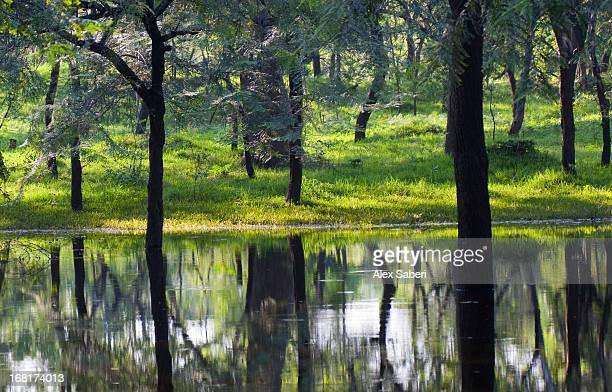 a lake in the green forest in polonnaruwa temple area - alex saberi fotografías e imágenes de stock