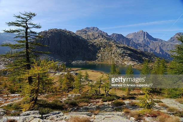 a lake in the wilderness - european larch stock pictures, royalty-free photos & images
