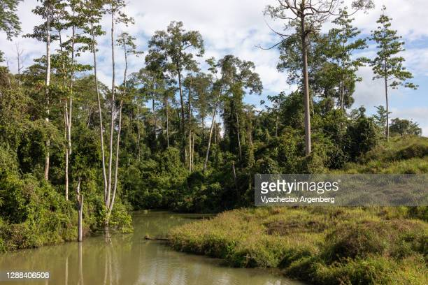 lake in tropical forest, sabah, borneo, malaysia - argenberg stock pictures, royalty-free photos & images