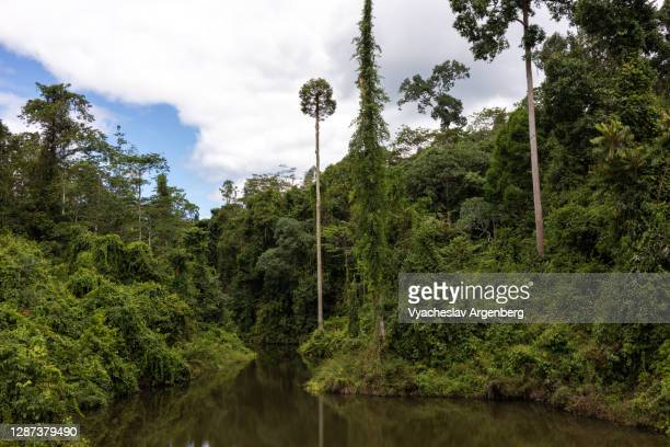 lake in tropical rainforest, borneo, malaysia - argenberg stock pictures, royalty-free photos & images