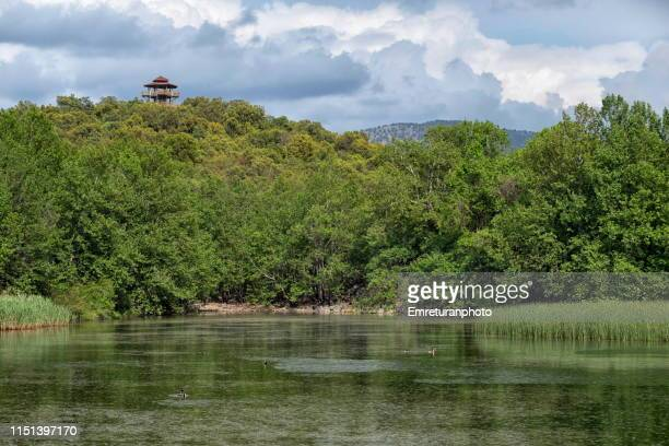 lake kovada view with ducks and green woodland at the background. - emreturanphoto stock pictures, royalty-free photos & images