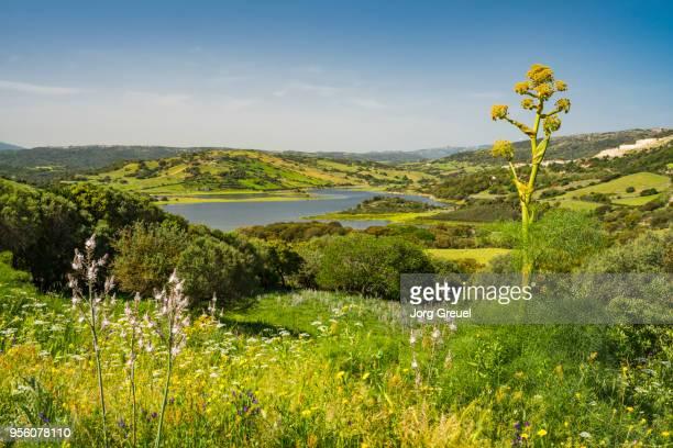 lake liscia in springtime - cerdeña fotografías e imágenes de stock