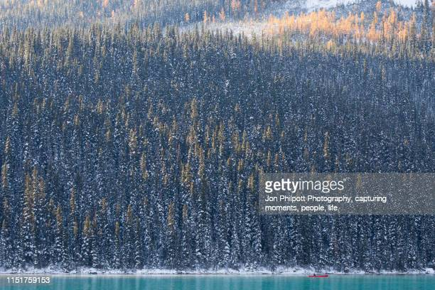 lake louise banff national park canada - canadian rockies stock pictures, royalty-free photos & images