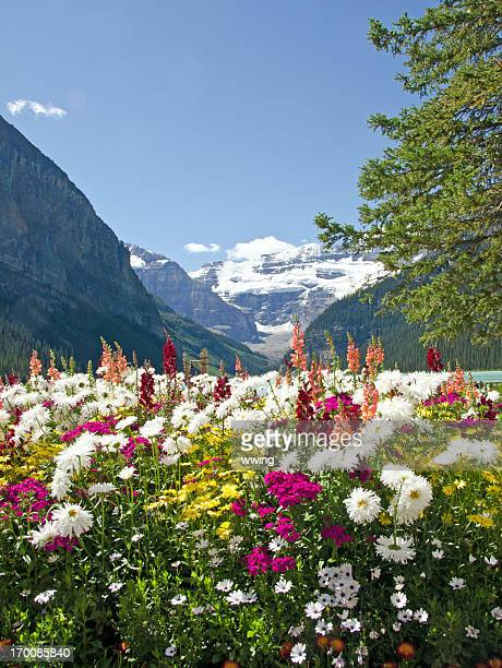 Lake Louise Flowers