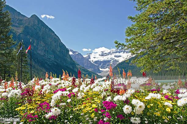 Lake Louise Summer  Flowers