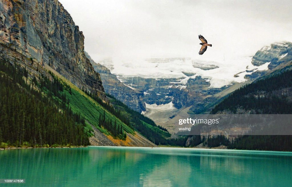 Lake Louse summer with hawk flying over lake : Stock Photo
