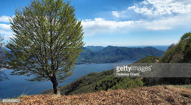 lake maggiore panorama view from mountain top, northern italy - province of verbano cusio ossola stock pictures, royalty-free photos & images