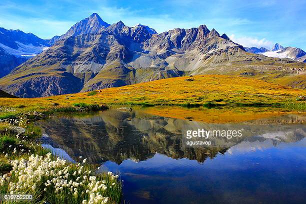 lake mirrored swiss alps reflection, cotton wildflowers field, zermatt - karwendel mountains stock pictures, royalty-free photos & images