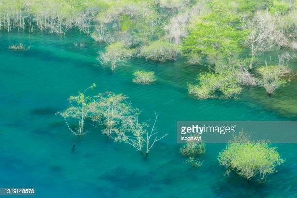 lake miyama, forest on the water - isogawyi stock pictures, royalty-free photos & images