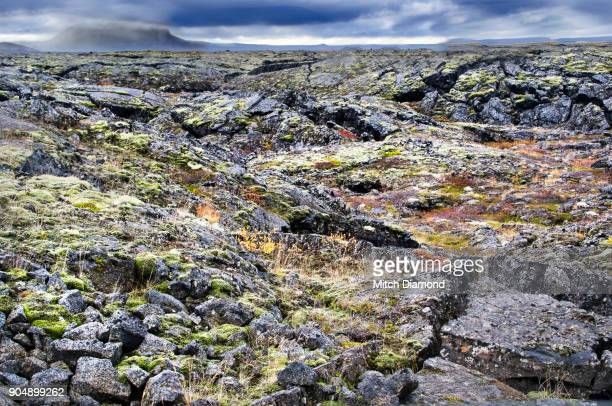 lake myvatn area in iceland - lava plain stock pictures, royalty-free photos & images