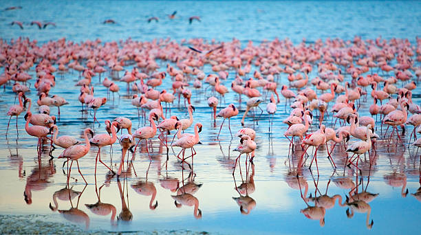 Lake Nakaru Flamingoes Wall Art